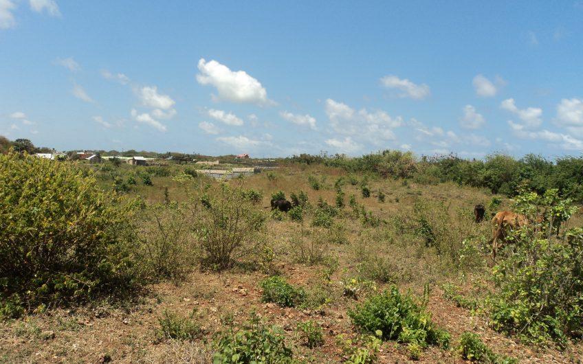 Coral Estate 2